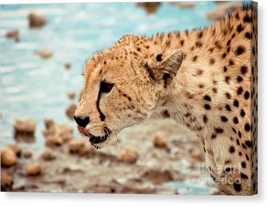 Cheetah Headshot Canvas Print by Darcy Michaelchuk