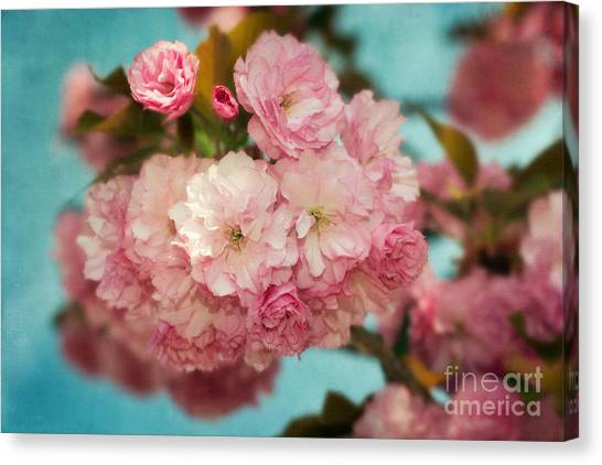 Cherry Blossoms Kanzan Three Canvas Print by Susan Isakson