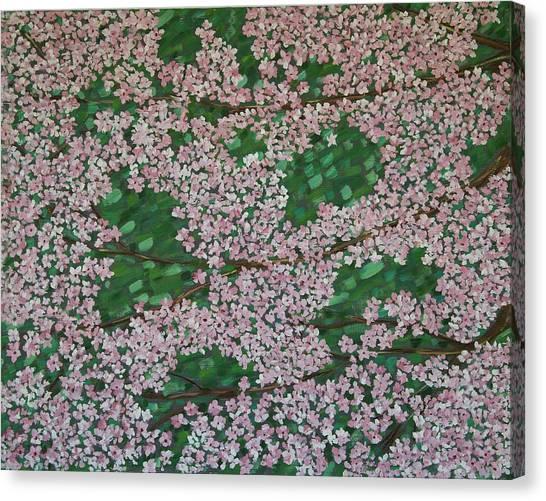 Cherry Blossoms Canvas Print by Karen Alonge