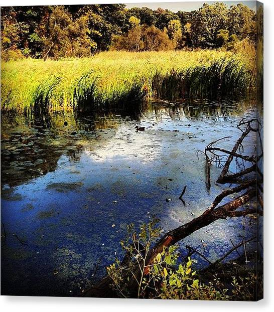 Ontario Canvas Print - #cherryhillpark #ontario #canada #fall by Tanya B