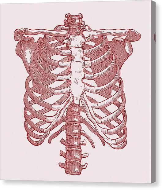 Collar Bones Art Page 5 Of 9 Fine Art America