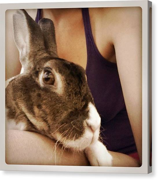 Rabbits Canvas Print - Chica by Mary Rose