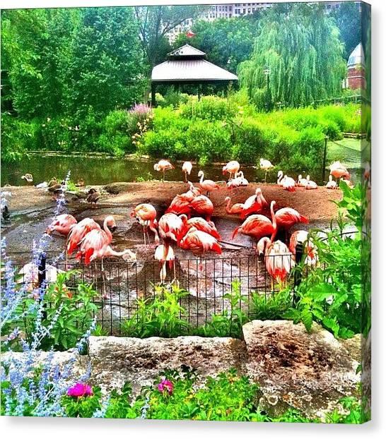 Flamingos Canvas Print - Chicago Flamingos #chicago #flamingos by David Sabat
