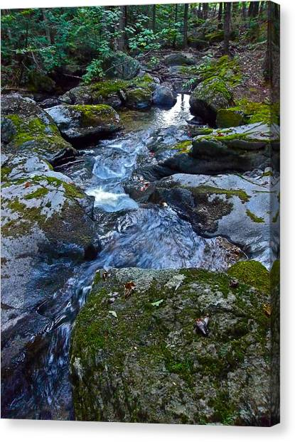 Childs Brook Summer 23 Canvas Print by George Ramos