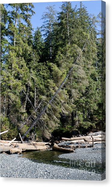 Juan De Fuca Provincial Park Canvas Print - China Creek China Beach Juan De Fuca Provincial Park Bc Canada by Andy Smy