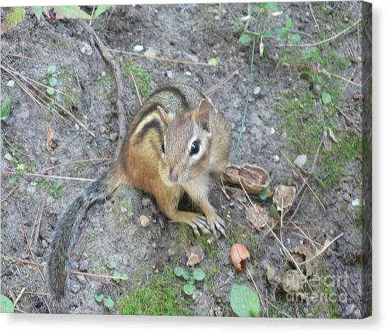 Chipmunk Feast Canvas Print
