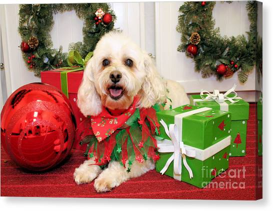 Shih Tzus Canvas Print - Christmas Portraits - Shih Tzu Mixed Breed by Renae Crevalle