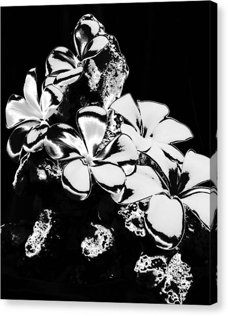 Chrome Plumeria Canvas Print by Elizabeth  Doran