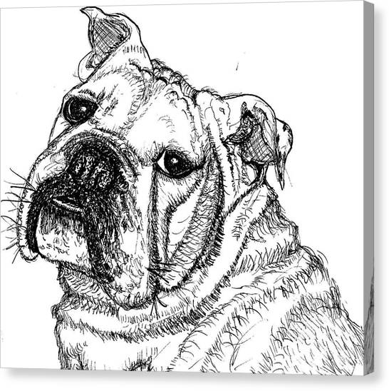 English Bull Dog Canvas Print - Chunky by DJ Laughlin