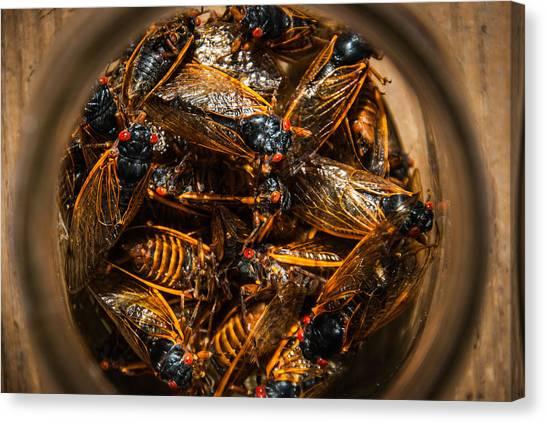 Cicada Madness Canvas Print