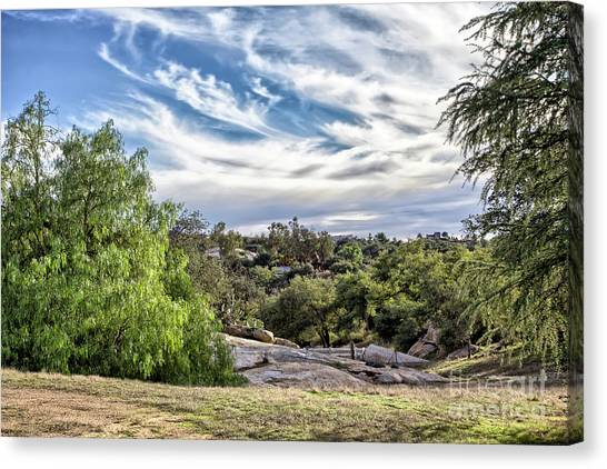 Cirrus Clouds With Trees Canvas Print