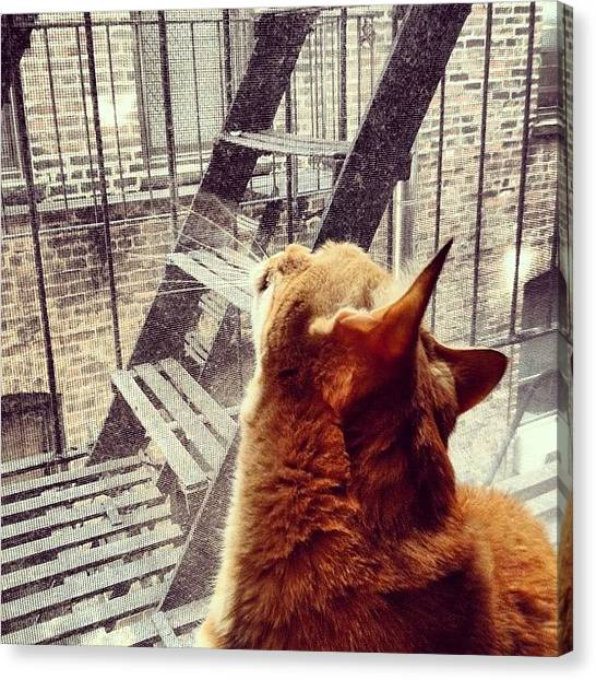 Orange Canvas Print - City Cat And Fire Escapes by Vivienne Gucwa
