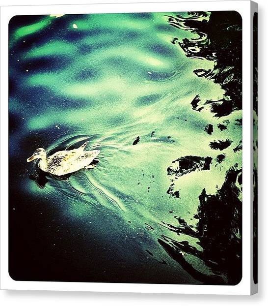 Water Birds Canvas Print - City Duck by Natasha Marco