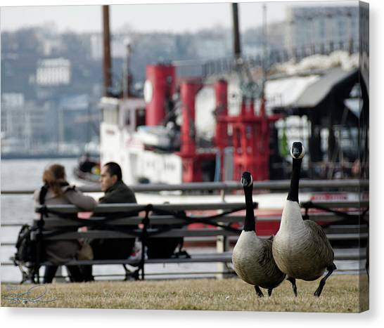 City Geese Canvas Print