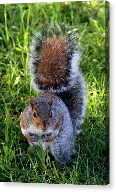 City Squirrel Canvas Print