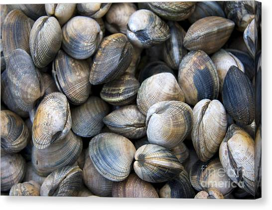 Clams Canvas Print - Clam Shell Background by Jane Rix