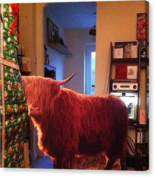 Farmers Canvas Print - Clare Got Me A Fucking Cow!!!!! :) #cow by Ash Hughes