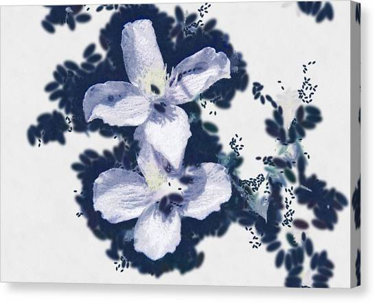 Clematis In Blue Canvas Print