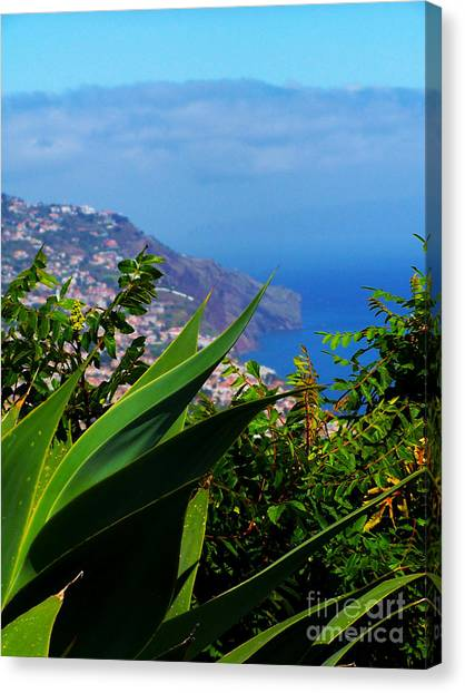 Cliffs Of Madeira Canvas Print by Patricia Land