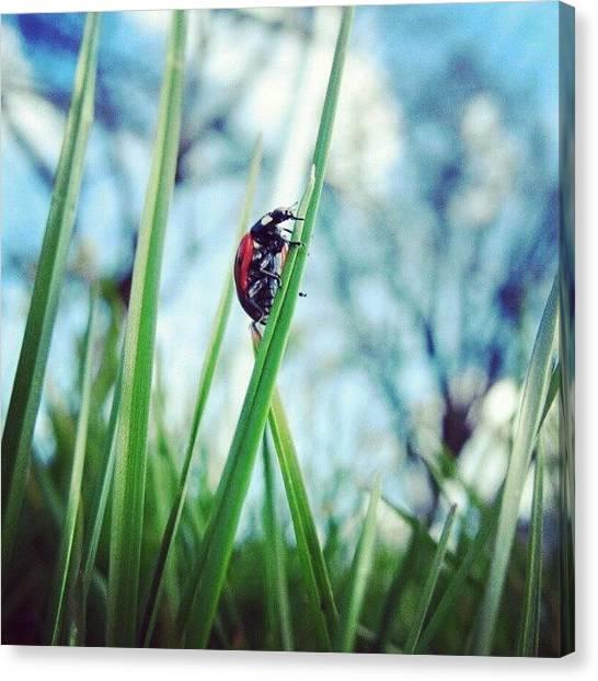 Ladybugs Canvas Print - Climbing High by Elisa B
