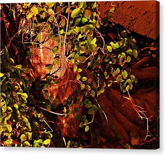 Climbing Magic Plant Canvas Print by Susana Sanchez Giraud