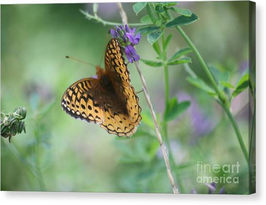 Close-up Butterfly Canvas Print