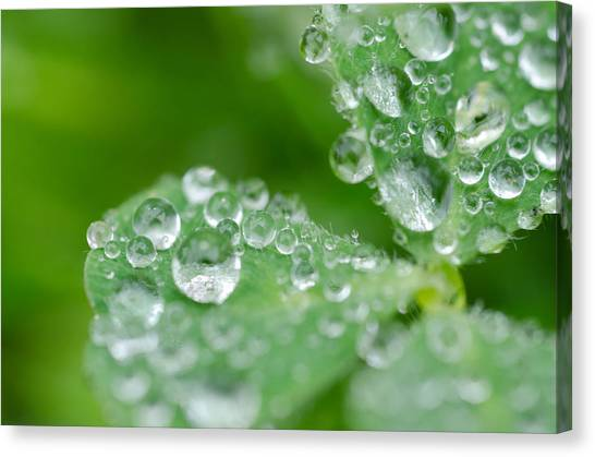 Canvas Print featuring the photograph Close Up Clover by Margaret Pitcher