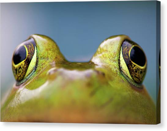 Bullfrogs Canvas Print - Close-up Of American Bullfrog Eyes by Nick Harris Photography