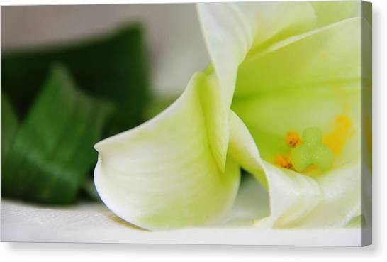 Close-up On White Lilies Canvas Print by Gal Ashkenazi