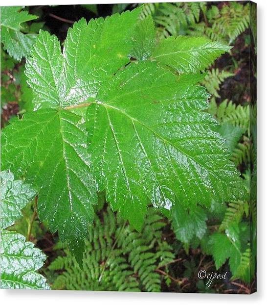Rainforests Canvas Print - Closeup In The Rainforest 2of5 Sept 4 by Cynthia Post
