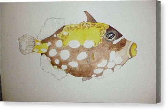Clown Triggerfish Canvas Print by Tim Forrester