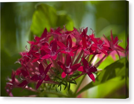 Cluster Of Red Canvas Print