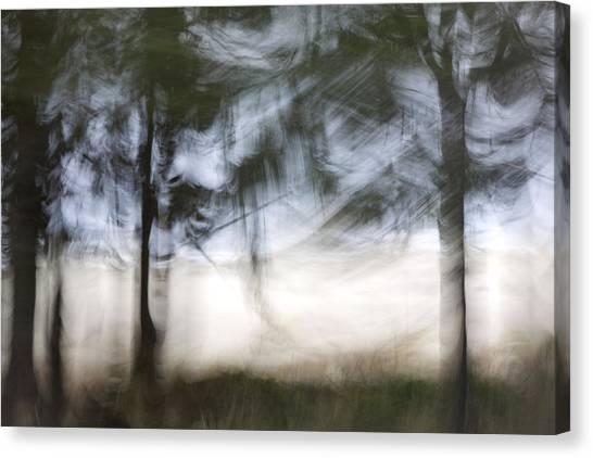 Impressionistic Canvas Print - Coastal Pines by Carol Leigh