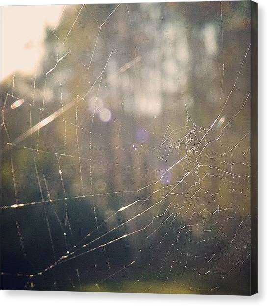 Spiders Canvas Print - #cobweb #web #spider #macro #closeup by Grace Shine