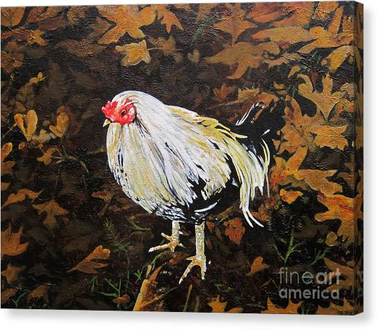 Cockerel Canvas Print by Carrie Jackson