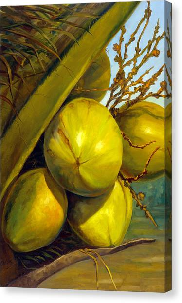 Coconuts Series One Canvas Print by Jose Romero