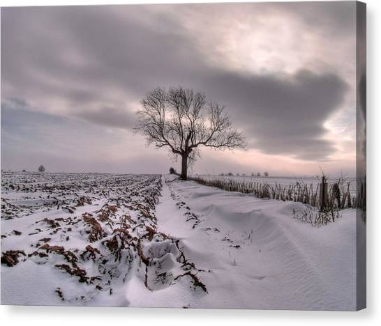 Cold And Lonely Canvas Print