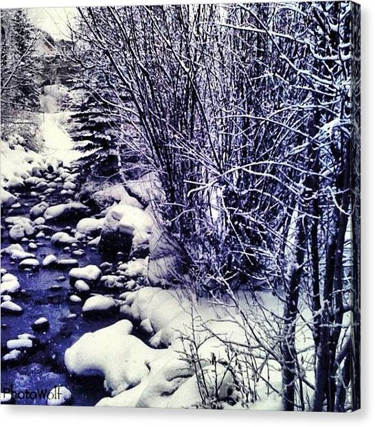 Wolves Canvas Print - Cold Snowy Beaver Creek, Colorado by Wolf Stumpf
