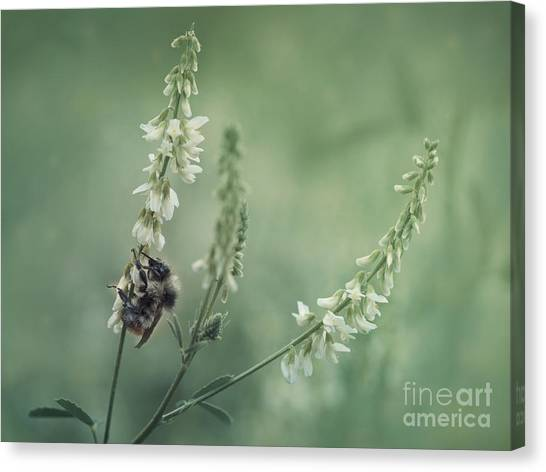 Clover Canvas Print - Collecting The Summer by Priska Wettstein