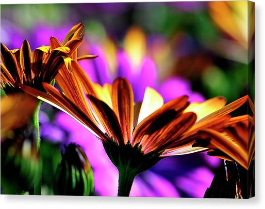 Color And Light Canvas Print