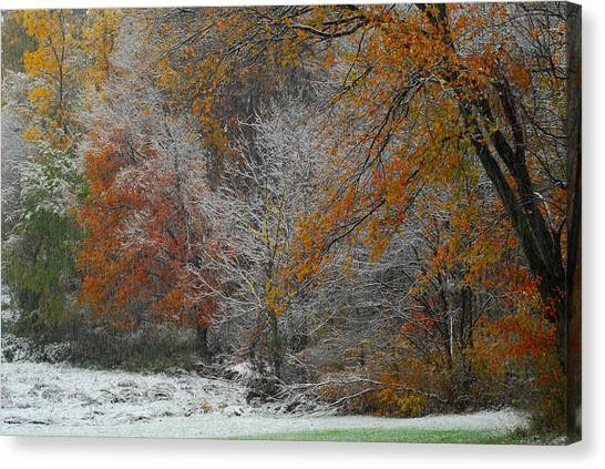 Color Caught In The Snow Canvas Print