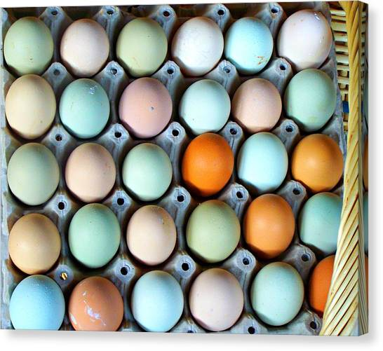 Color Eggs  Canvas Print