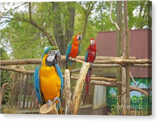 Color Of Parrots  Canvas Print