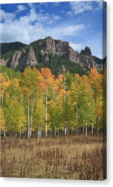 Colorado Aspens In Fall Canvas Print
