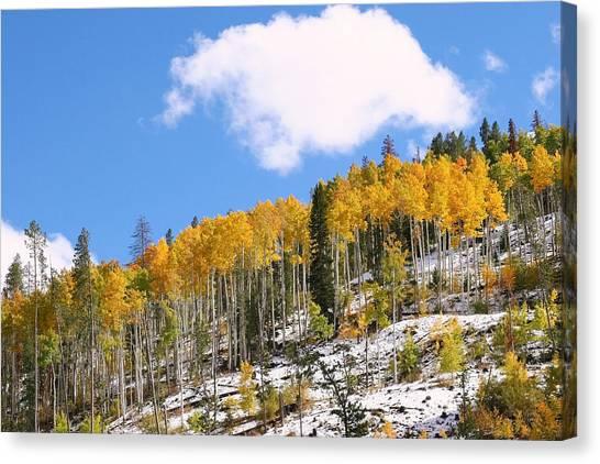 Colorado Autumn Canvas Print by Sharon I Williams