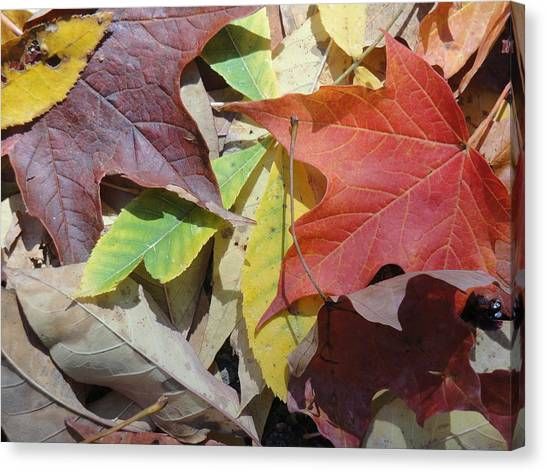 Colorful Fall Leaves Canvas Print by Kathy Lyon-Smith