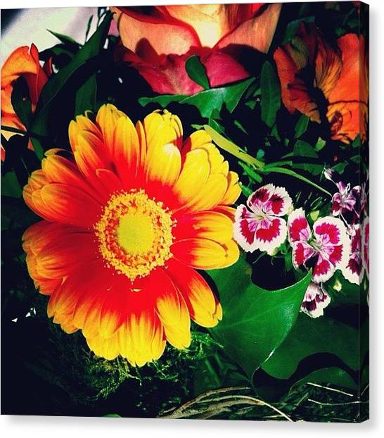 Orange Canvas Print - Colorful Flowers by Matthias Hauser