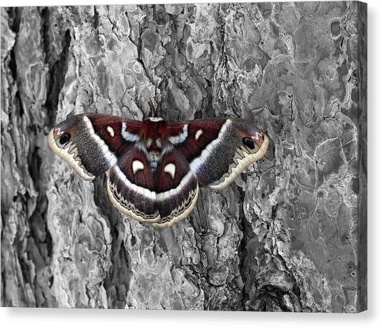 Colorful Moth Canvas Print