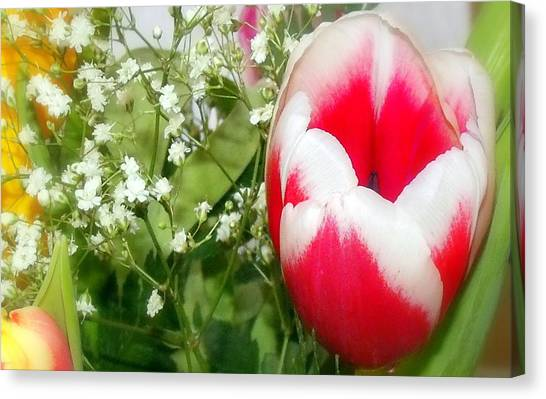 Colorful Tulip Canvas Print by Jose Lopez