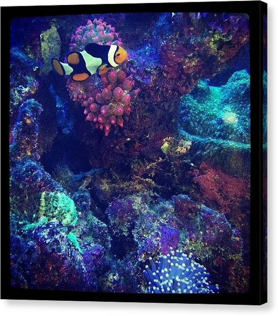 Underwater Canvas Print - Colorful Underwater by Zachary Voo